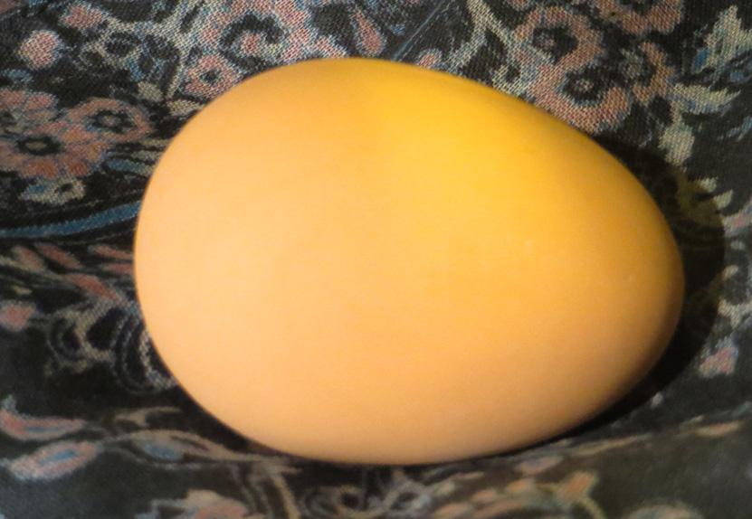 2015_Aug 12_Bouncing Egg