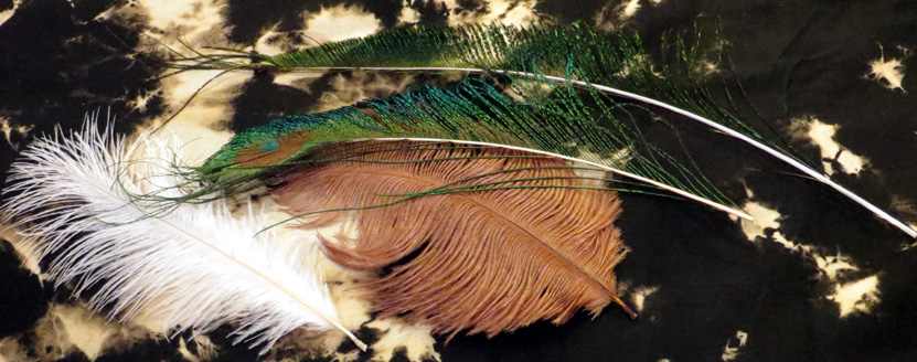 2015_Nov 18_Feathers