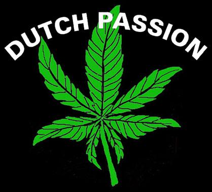 DUTCH PASSION leaf logo